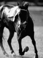 Aintree races